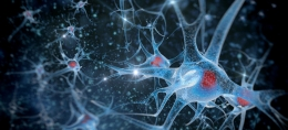 brain-health-main-m7orkc8oyyvr6kftitr0cd7y0elhkcdc9e0gjx8688
