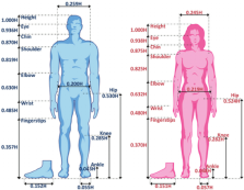 male-vs-female-anatomy-standard-properties-of-the-male-and-female-bodies